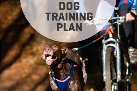 Workshop Dog Training Plan